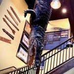 Alligator hanging from ceiling Savannah